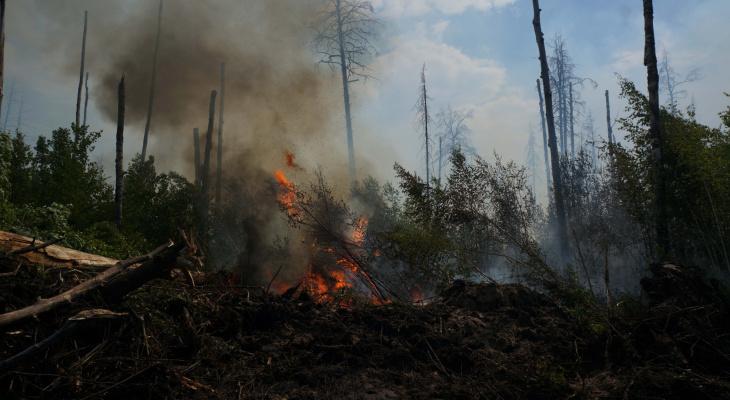 Крупный пожар в мордовском заповеднике ликвидирован