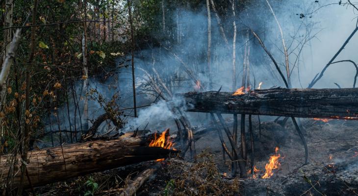 Гринпис помогает Мордовскому заповеднику ликвидировать последствия лесного пожара
