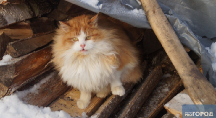 В Мордовии зафиксированы случаи бешенства среди кошек