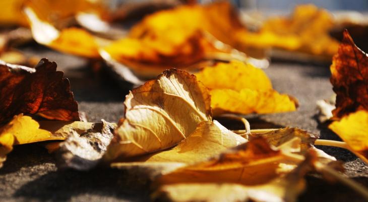 Без осадков и ветрено: прогноз погоды в Саранске на 17 октября