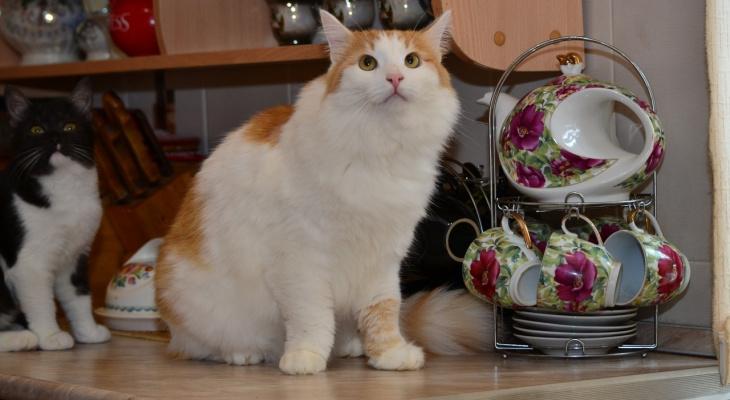 Забери меня домой: в Саранске бездомные животные ищут заботливых хозяев