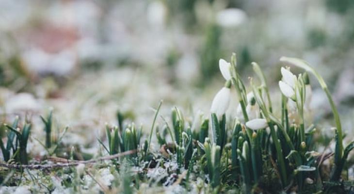 Россиянам рассказали, какая погода будет в начале весны