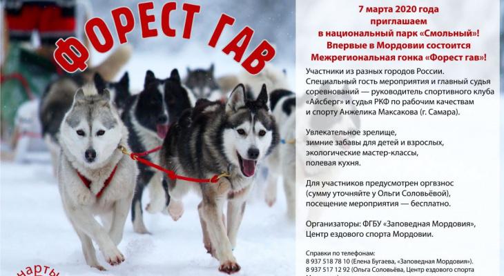 В Мордовии состоится Первая межрегиональная гонка на собачьих упряжках «Форест гав»