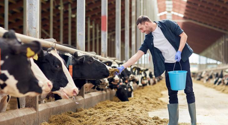 Россельхозбанк научит запускать и вести рентабельный и устойчивый фермерский бизнес