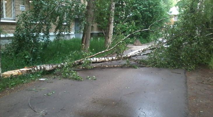 В ближайшие часы на Саранск вновь обрушится ураган