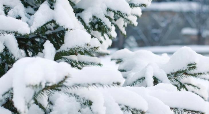 Синоптики рассказали о погоде в Саранске в праздничные выходные