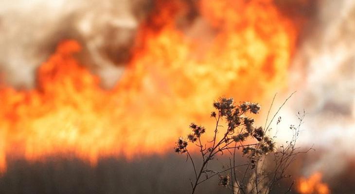 В Мордовии было ликвидировано более 700 пожаров из-за возгорания травы и мусора
