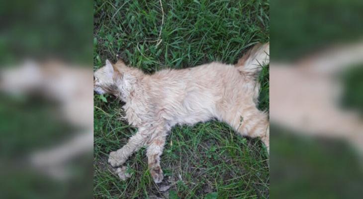 Зоозащитники в Мордовии рассказали о массовом отравлении кошек