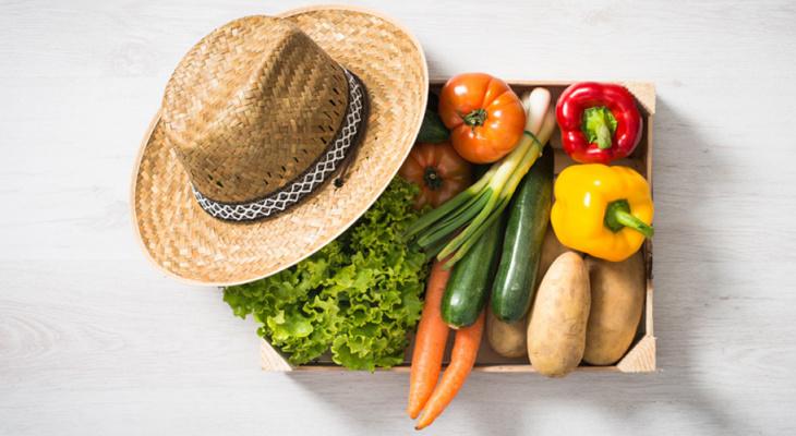 Россельхозбанк: к 2030 году каждая 10 покупка продуктов питания будет совершаться через онлайн-каналы