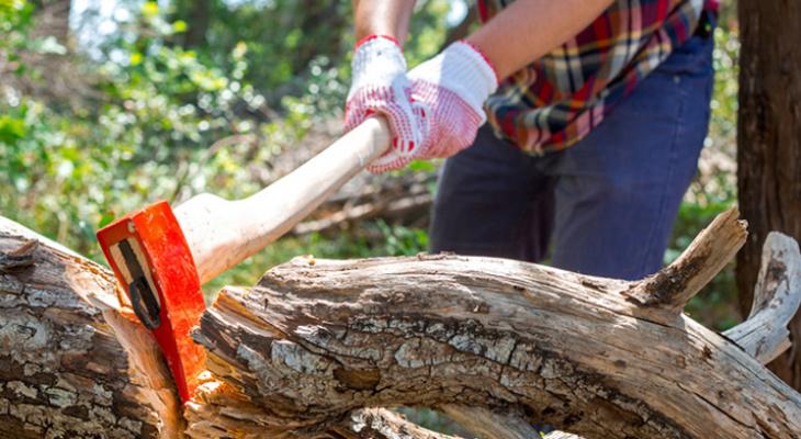 В Мордовии директор лесничества заплатит штраф в 20 тысяч рублей за нелегальную рубку деревьев