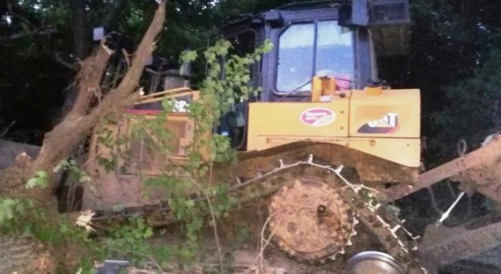46-летний мужчина в Мордовии вырубил лесные насаждения и стал фигурантом уголовного дела