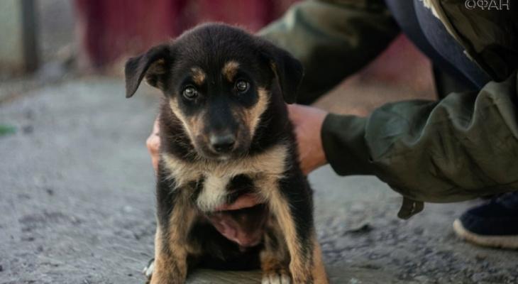 Жители Саранска собрали деньги на мясо для бездомных собак