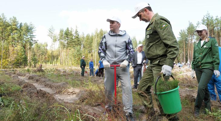 В Мордовии посадили 10 тысяч сеянцев сосны