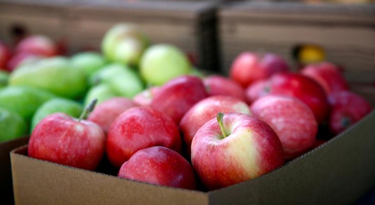 В Зубово-Полянском районе неизвестные заплатили за яблоки фальшивой купюрой