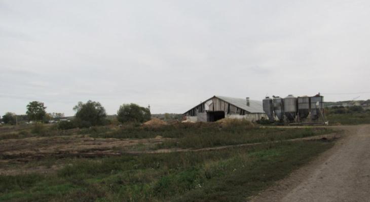 Более тонны кукурузы украл тракторист с фермы в Мордовии
