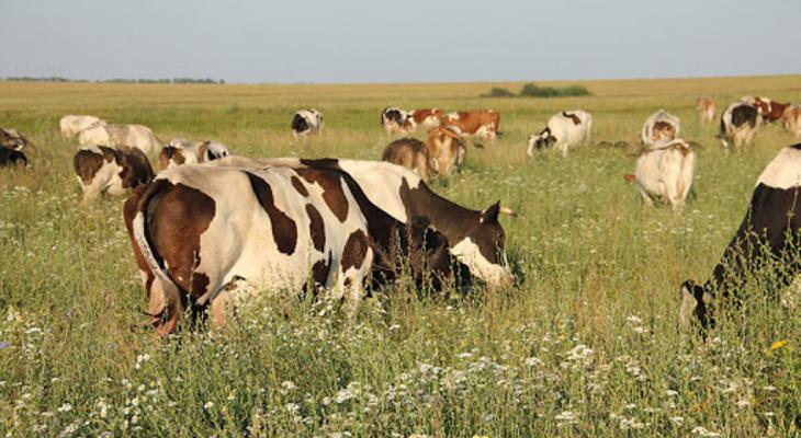 В Мордовии подросток получил травмы во время выпаса скота: в дело вмешалась прокуратура