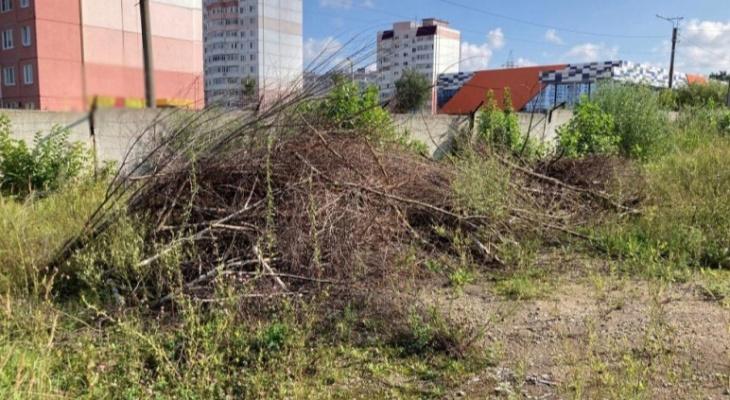 В Саранске мужчина незаконно вырубил зеленые насаждения на 1,5 млн рублей